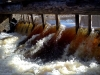 palju_vett_suures_tammis